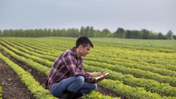 farmer, soybean, field, agriculture