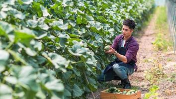 A male modern farmer in the Melon-Shed