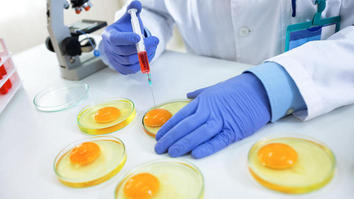 Food scientist expecting chicken eggs for quality control